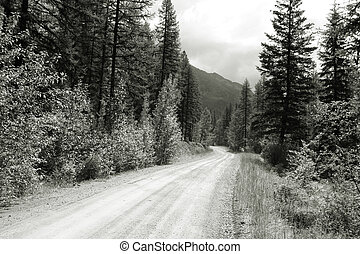 Montana landscape - Road through pine woods in Montana