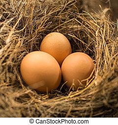 Eggs in bird nest, natural light.