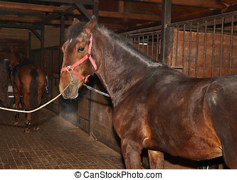 Brown horse in the stable - Young chestnut horse standing in...