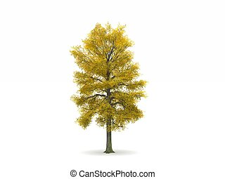 Lime or Linden Tree with Autumn Leaves