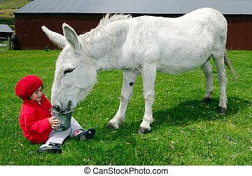 Little girl feed animal - Little girl feeds white donkey in...