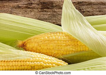 Primer plano, fresco, maíz, Mazorcas