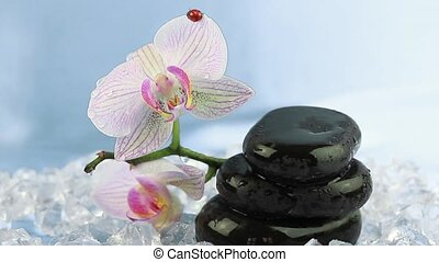 Zen stones with orchid and ladybird