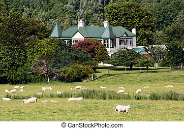 Agriculture in New Zealand NZ NZL - GLENORCHY, NZ - JAN...