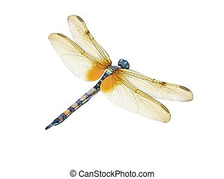 Dragonfly - 3d render of a dragonfly