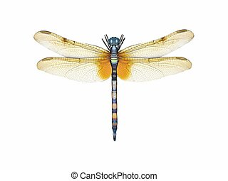 Dragonfly - 3d render of a dragonfly in top view