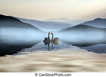 Beautiful romantic image of swans on misty lake with...