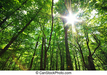 Green forest sunlight. Nature composition.