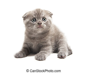 Beauty little cat Isolated object