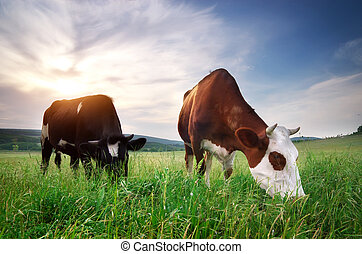 Cow in meadow