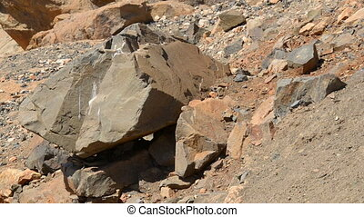 group of barbary ground squirrel - A group of barbary ground...