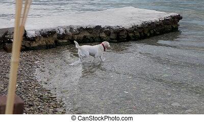 Dog swim in the sea