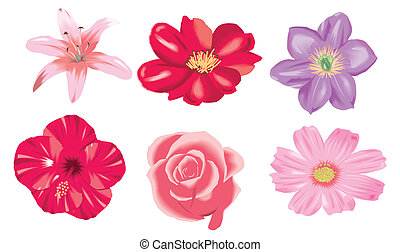 colored flowers illustration