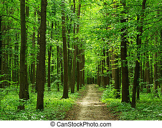 forest -  path is in the green forest