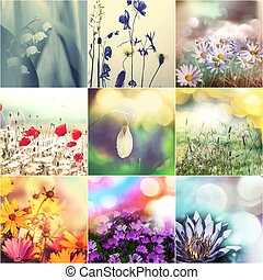 Flowers collage - fall background