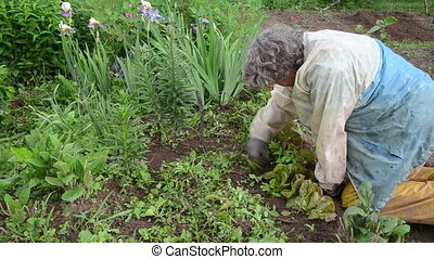 weeding grass - elderly woman with a jacket weeding grass...