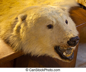 Fur of bear on the table