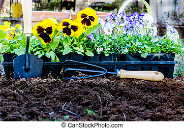 Spring Gardening - Spring gardening. Pots of daisies and...