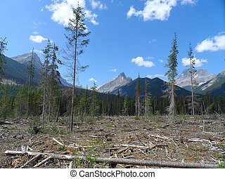 Logged area - Mountain as viewed from a forest service road...
