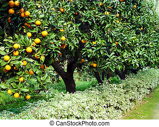 orange fruit tree orchard