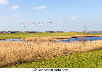 Floodplain with reed and banks in Holland - Floodplain with...