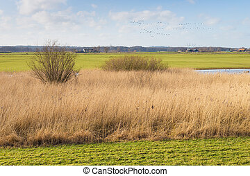 Floodplain with reed in Harculo in The Netherlands