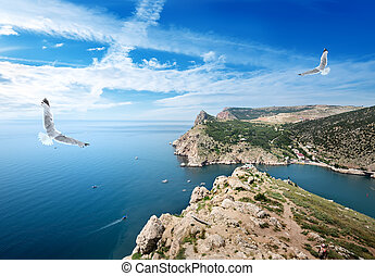 Two gulls over the sea and mountains