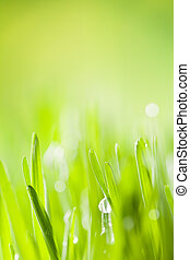 Detail of grass - Macro photo of fresh grass with drops of...