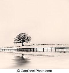 Winter Oak Tree in Snow - Oak tree in a field of snow in...