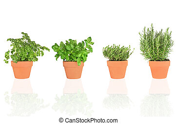 Parsley, Basil, Thyme and Rosemary Herbs