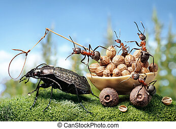 ants harnessing the bug, ant tales - team of ants harnessing...