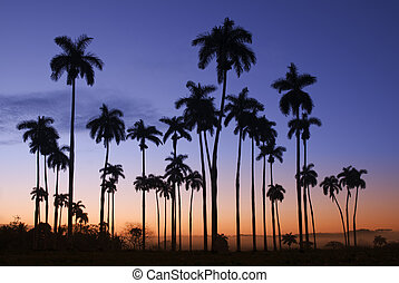 Palm - Beautiful backlight palm trees landscape in Cuba