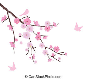 cherry blossom - vector cherry blossom branch with birds