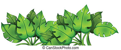 Green leafy plant - Illustration of the green leafy plant on...