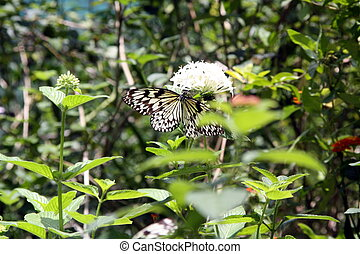 Butterfly, paper kite BU-2928 - Paper Kite or the Rice Paper...
