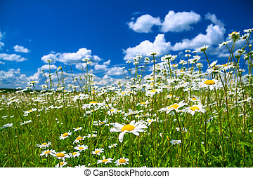 beautiful summer rural landscape with a blossoming meadow...