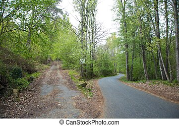 crossroads in the forest - small road through the trees in...