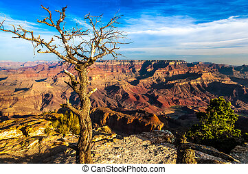Landscape view of Grand canyon with dry tree in foreground,...