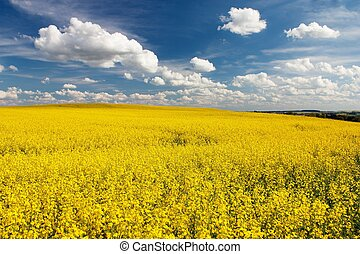 field of rapeseed with beautiful cloud - plant for green...