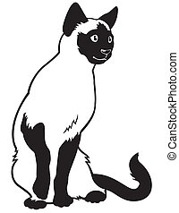 siamese cat black white