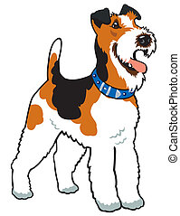 fox terrier - dog fox terrier breed, image isolated on white...
