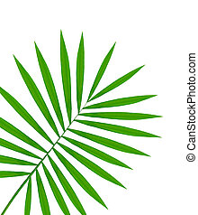 beautiful green palm leaf isolated on white background
