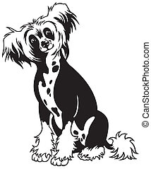 chinese crested dog - dog chinese crested breed , black and...