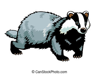 badger isolated on white background