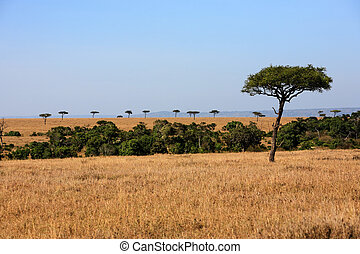 plains Masai Mara reserve Kenya Africa - beautiful plains of...