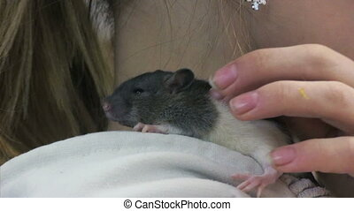 pet mouse - Little mouse on girls shoulder