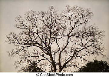 tree branches silhouette.