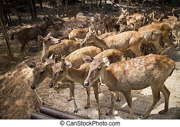 deer zoo