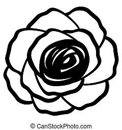 contour of a rose