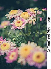 Vintage flower backgroud